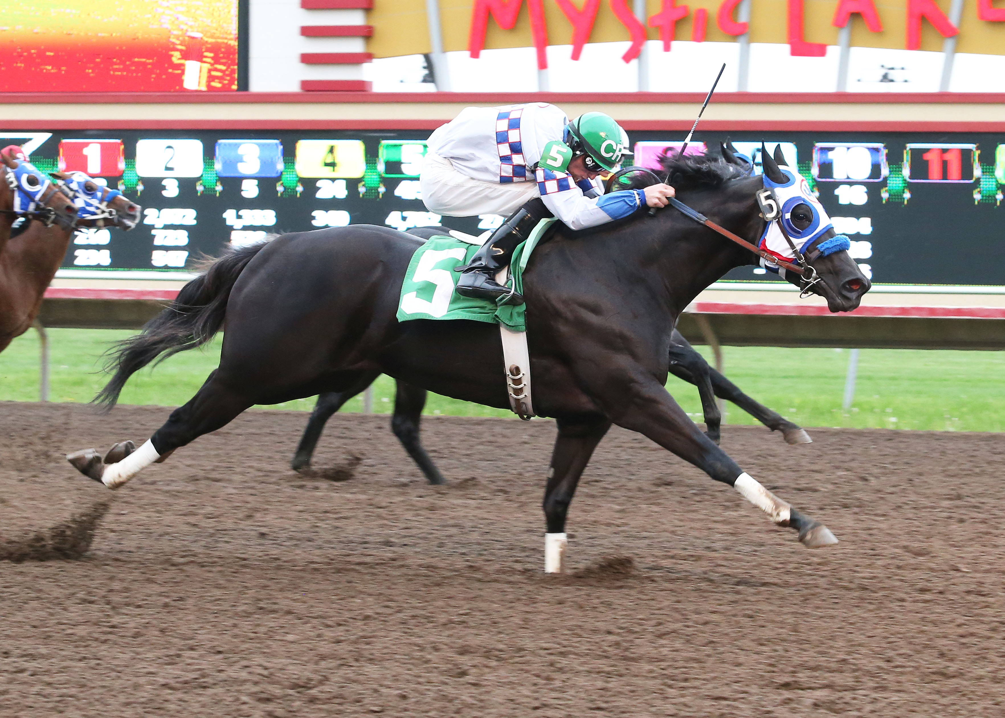 BP_Painted_Lady_MQHRA_Dat_At_The_Races_Dash_06-08-13_CBY_Finish