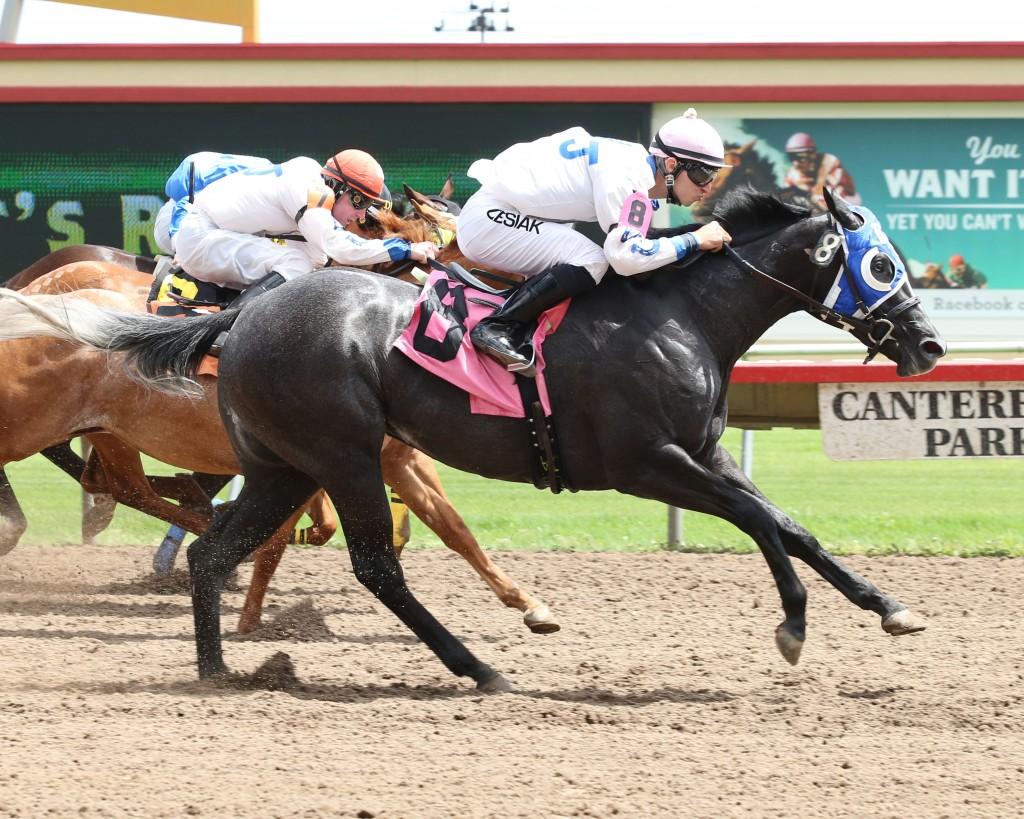 BHR Guys Flash Me - Minnesota Stallion Breeders' Quarter Horse Futurity - 06-29-14 - R03 - CBY - Finish