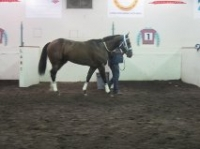 All About Larry at AQHA Challenge.jpg